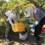 Bienen werden umgefuellt
