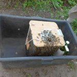 Bienenschwarm in Transportkorb
