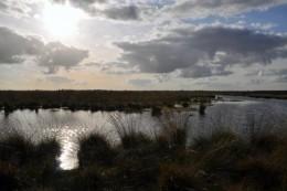 ein Moor, mit Fluss und Büschen