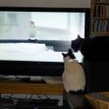 Zwei Katzen beobachten einen Vogel auf dem Bildschirm