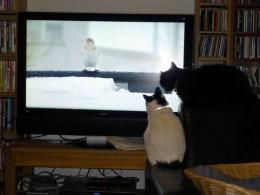 Katze beobachtet einen Vogel auf dem Bildschirm