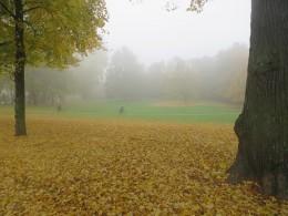herbstlicher Park im Nebel mit Fahrradfahrern