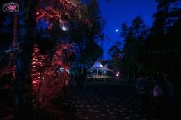 Musik Festival, Lichter, Nacht, Tanzen