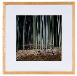 Gerahmtes Foto von Bambuswald