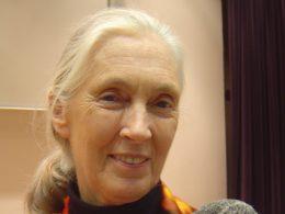 Portrait von lächelnder Jane Goodall