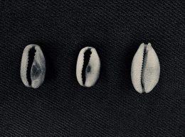 Drei Muscheln die nebeneinander liegen in schwarz weiß