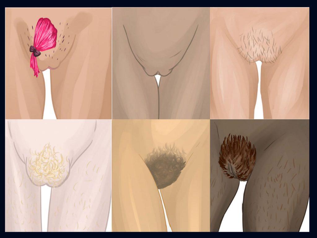 sechs unterschiedlich gezeichnete Vulven mit individuller Schamhaargestaltung