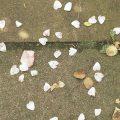 Blätter liegen auf Stein,