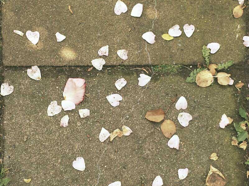 Blätter liegen auf Stein, Liebe meines Lebens