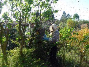 Fotografie, die eine Imkerin bei der Arbeit in der grünen Natur zeigt.