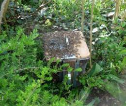 Fotografie, die einen Bienenschwarm auf einem Papierkorb in grüner Natur zeigt. Schwarm