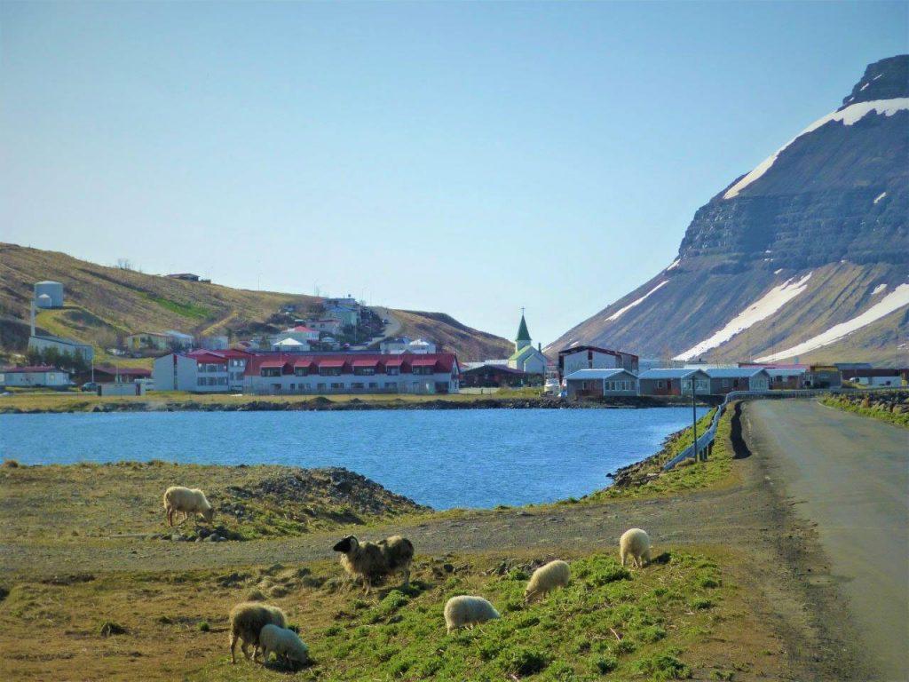Landschaftsbild mit Fjord und Dorf. Im Vordergrund einige Schafe