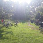 Fahrräder auf einer Wiese