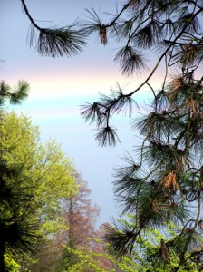 Regenbogen zwischen Bäumen