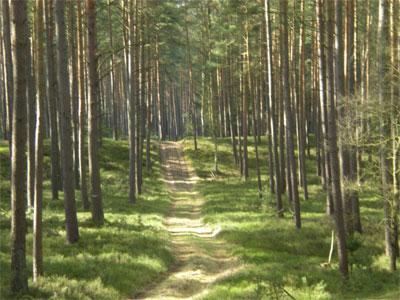 Wald mit ausgefahrenem Weg