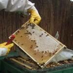 Imkerin hält eine Bienenwabe