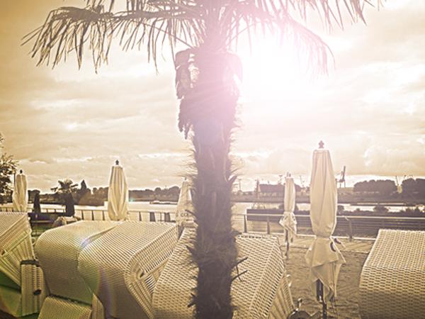 Strandkörbe mit einer Palme in der Sonne