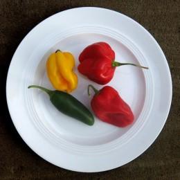 Chilischoten (rot, gelb und grün) auf einem Teller