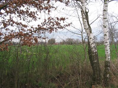 Landschaft, Baum im Vordergrund