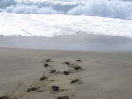 Spuren im Sand Wasser